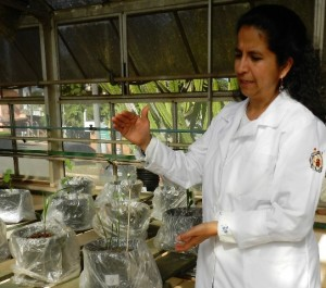 Jeannette Jimenez em casa de vegetação no Cena/USP