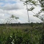 Ecótono campo nativo - Mata de Tabuleiros