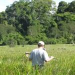 Ecótono Campo - Floresta